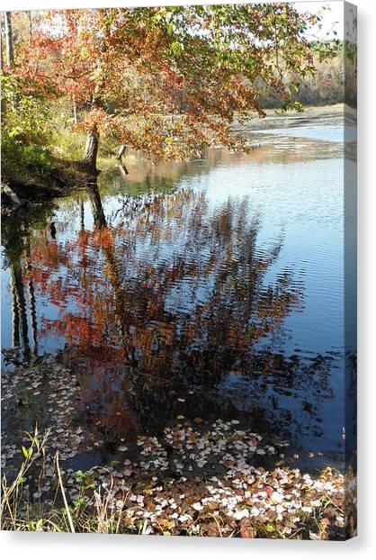 Leaves Of Reflections Canvas Print by Kim Galluzzo Wozniak