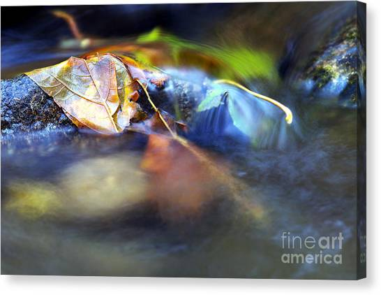 Maple Leaf Canvas Prints Page 40 Of 100 Fine Art America
