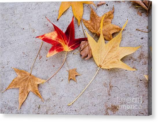 Leaves On The Sidewalk Canvas Print