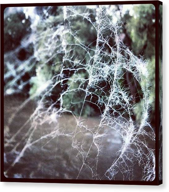 Spiders Canvas Print - Left Alone by Florian Divi