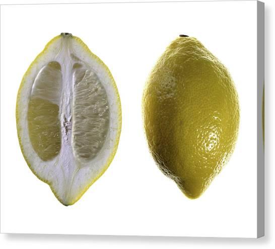 Lemon Canvas Print by Nathaniel Kolby