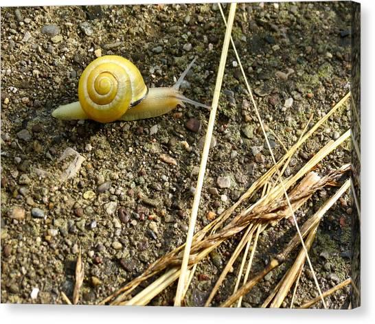 Lemon Snail Canvas Print
