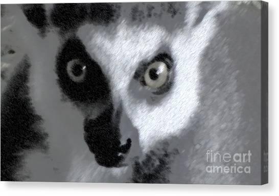 Lemur Canvas Print by John From CNY