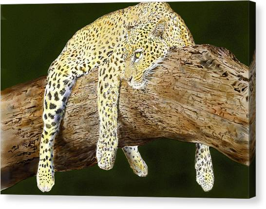 Leopard At Rest Canvas Print by Yvonne Scott