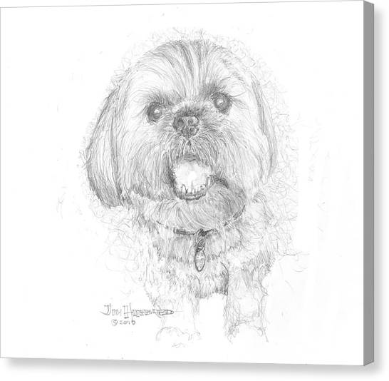 Lhasa Apso Canvas Print by Jim Hubbard