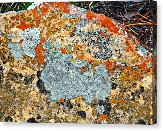 Canvas Print - Lichens 2. by Randall Templeton