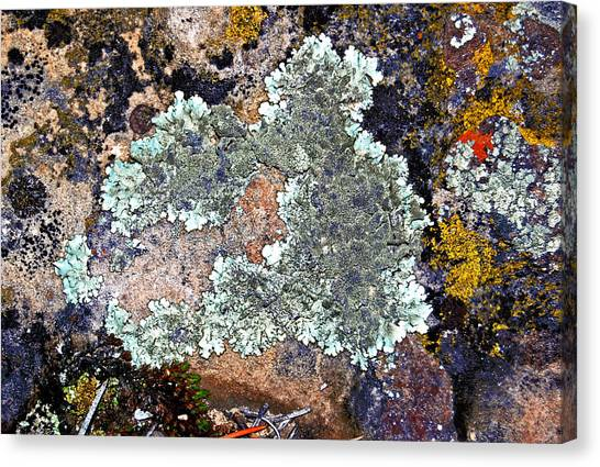 Canvas Print - Lichens On A Rock by Randall Templeton