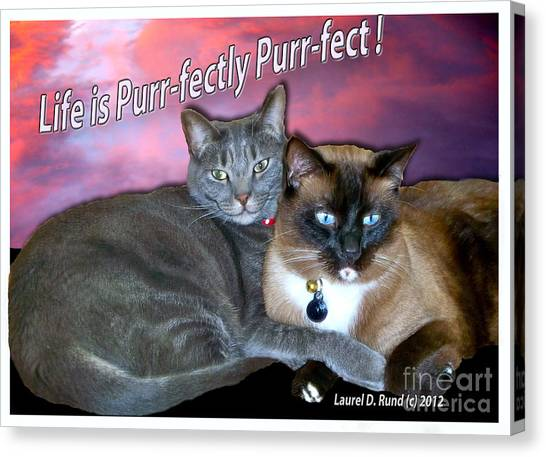 Life Is Purrfectly Purrfect Canvas Print