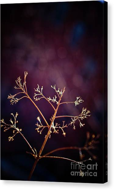 Light 1 Canvas Print by Rossi Love