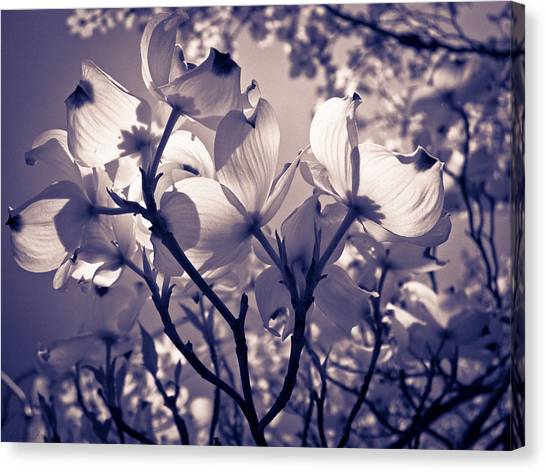 Light And Shadow Play Canvas Print by Victoria Ashley