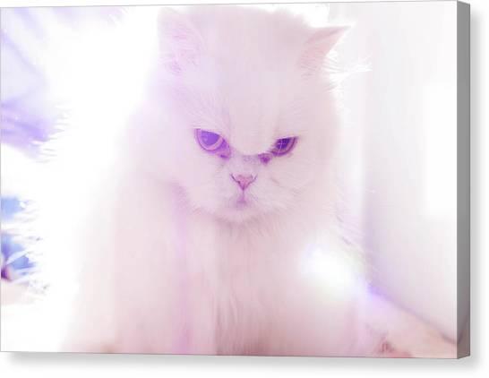 Light Cat Canvas Print by Luis Hernández Diaz