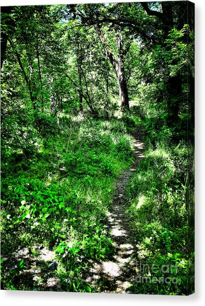 Lighted Path Canvas Print by Colleen Kammerer