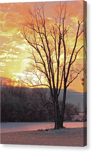 Lighten Up The Sty Canvas Print by Mike Flake