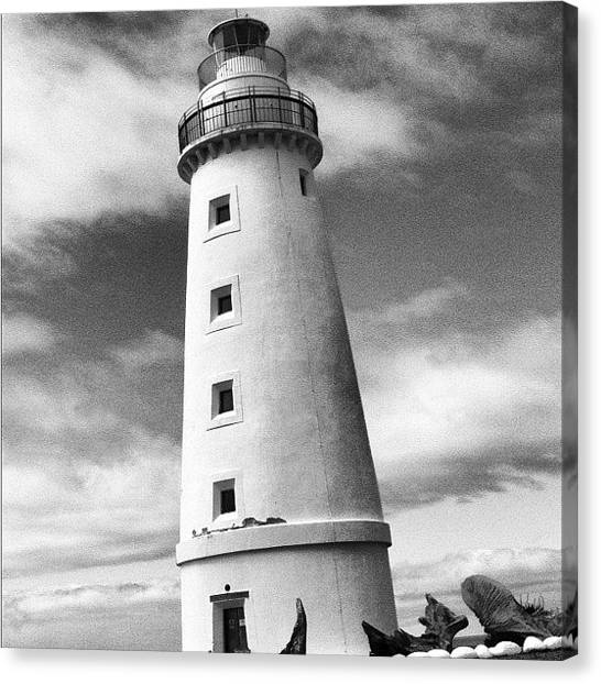 Kangaroo Canvas Print - Lighthouse by Andrew Coulson