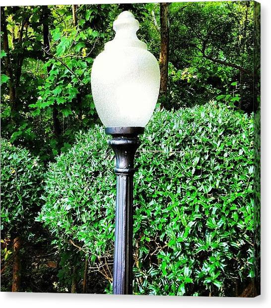 Still Life Canvas Print - Lightpole Forest by Jeff Kincade