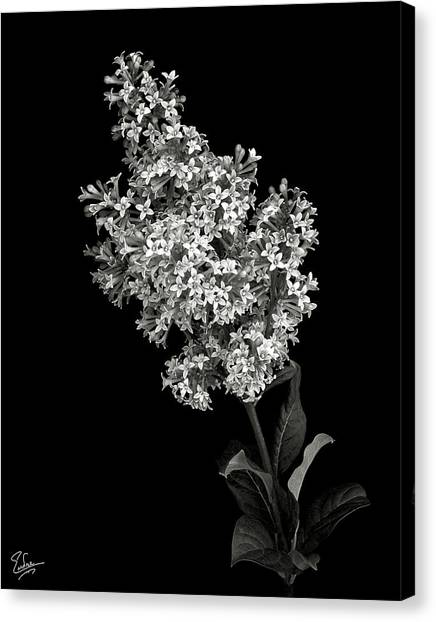 Lilac In Black And White Canvas Print