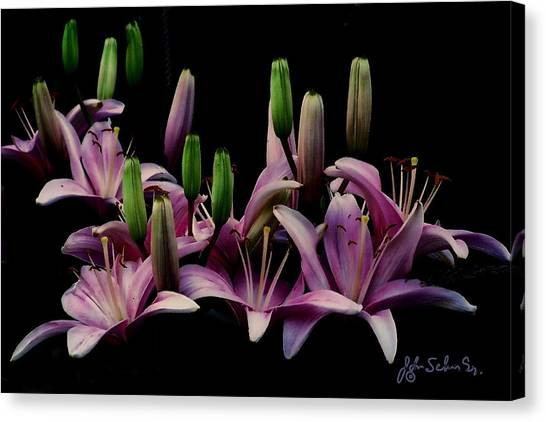 Lilies At Midnight Canvas Print