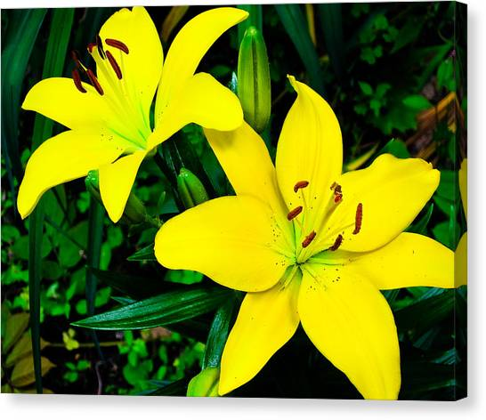 Lilies Canvas Print by Michael Ray
