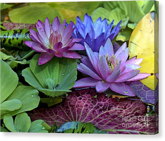 Lilies No. 27 Canvas Print by Anne Klar