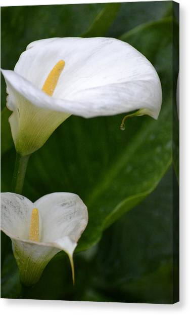 Lillies Canvas Print by Dickon Thompson