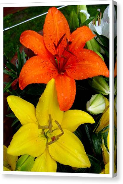 Lillies In Vermont Canvas Print