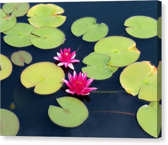 Lillies On Blue Canvas Print