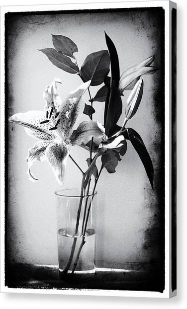 Lily 320bw Canvas Print