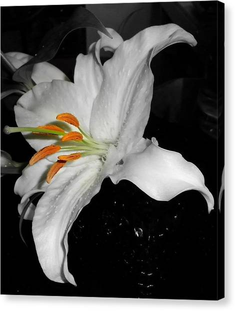 Lily Bell Canvas Print