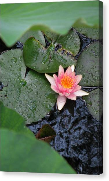 Lily Pad II Canvas Print by Suzanne Fenster