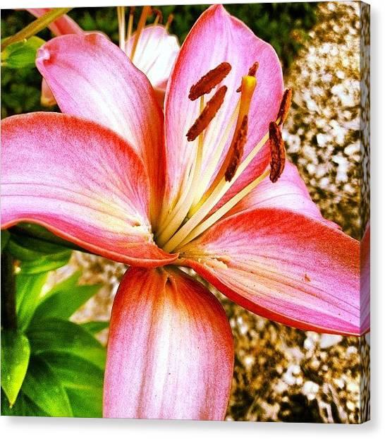 Lilies Canvas Print - Lily by Rex Pennington