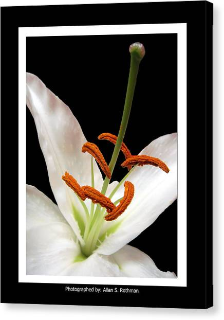 Lily Vertical Canvas Print