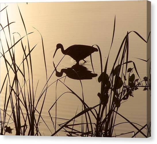 Limpkin At Dawn Canvas Print