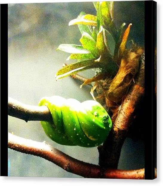 Reptiles Canvas Print - Lincoln Park Zoo by Michelle Behnken