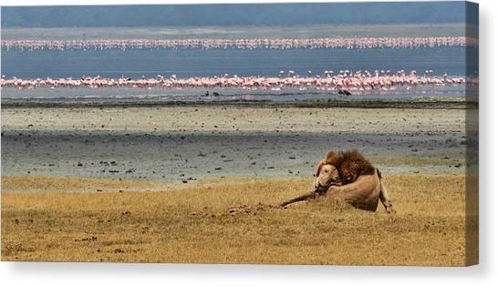 Lion And Flamingos Canvas Print by Joe Bonita