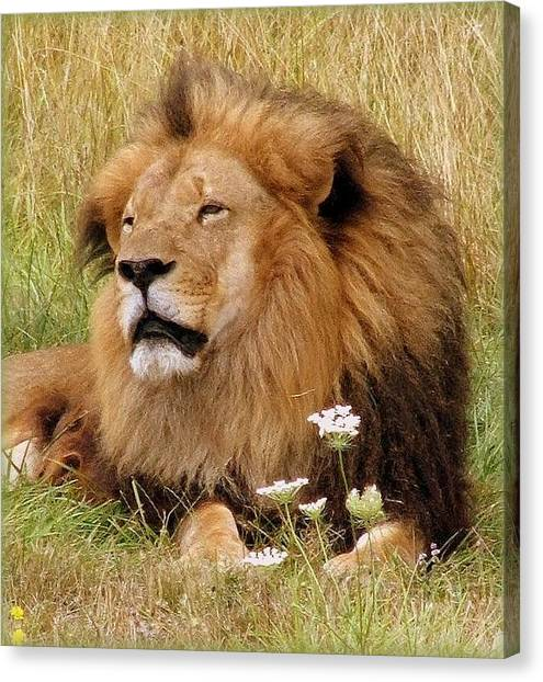 Lion Bouquet Canvas Print by Judy Garrett
