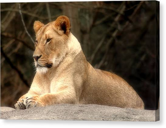 Lioness - Queen Of The Jungle Canvas Print
