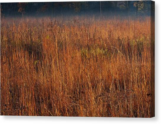 Prairie Sunrises Canvas Print - Little Bluestem Grasses On The Prairie by Steve Gadomski