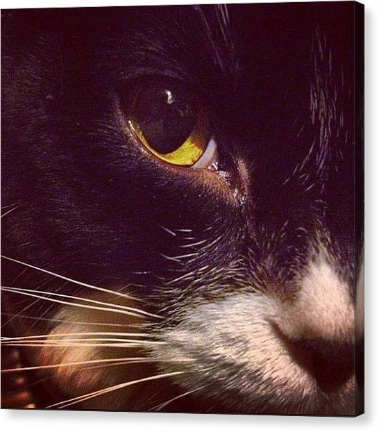Tuxedo Canvas Print - Little Cat Close Up by Momo and Little Cat