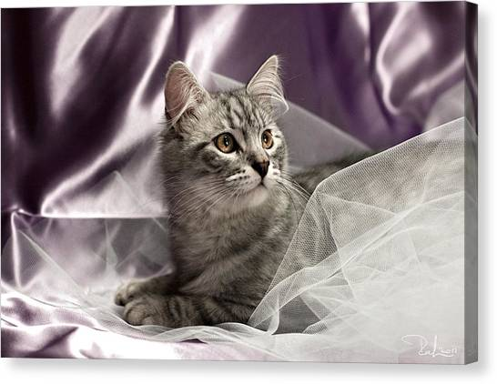 Little Cat On Lilac Canvas Print