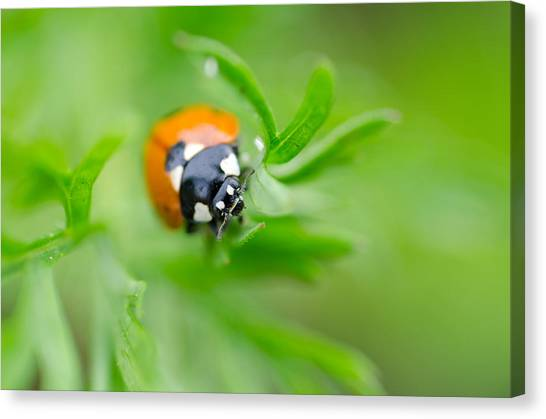 Canvas Print featuring the photograph Little Climbing Lady Bug by Margaret Pitcher