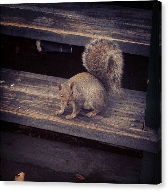 Squirrels Canvas Print - #little #fella Came To Say #hello In by Craig Dyson