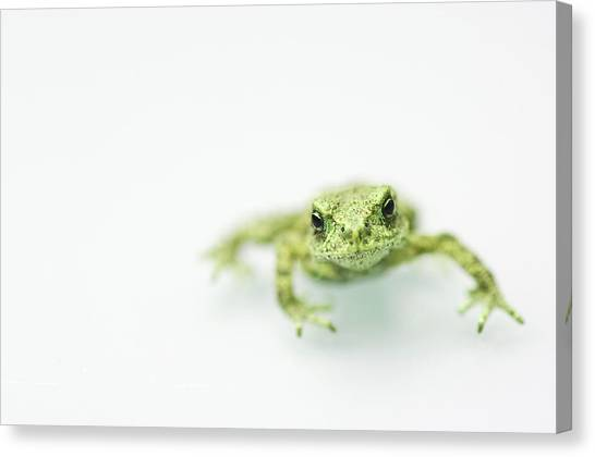 Frogs Canvas Print - Little Frog by Erik van Hannen