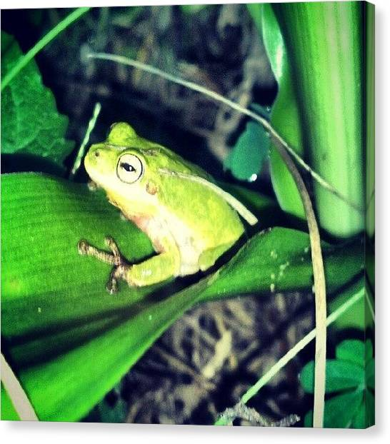Frogs Canvas Print - Little Froggy by Kaity Craven