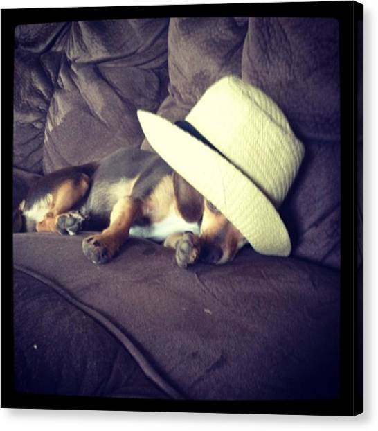 Little Guy Was So Tired He Fell Asleep Canvas Print by Stephanie Brown