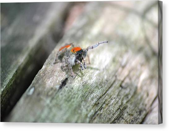 Little Jumper Canvas Print