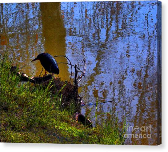 Little Pond At The Zoo Canvas Print