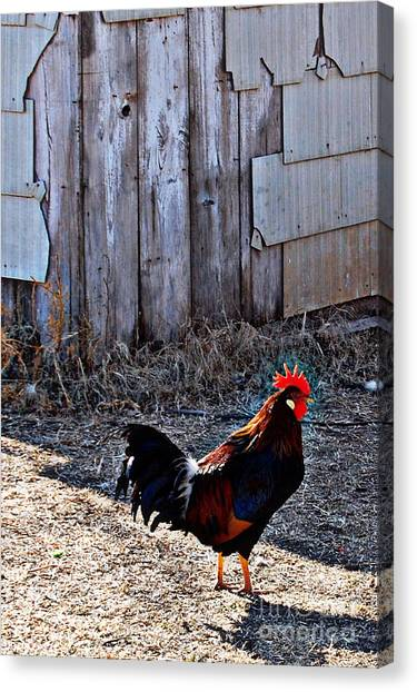 Little Red Rooster Canvas Print