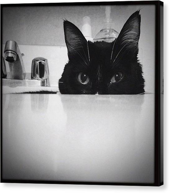 Tuxedo Canvas Print - Little's Sink by Momo and Little Cat