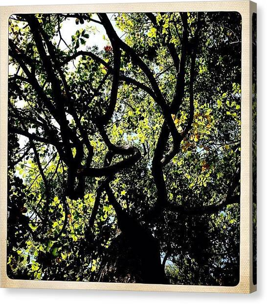Environment Canvas Print - Lively Happy #tree Dancing Up To The by Molly Slater Jones