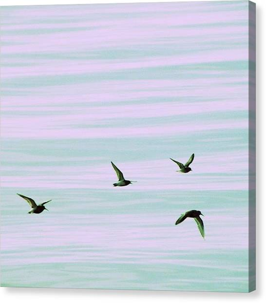Tools Canvas Print - Livin Free #birds #bird #flying #lake by Jessie Schafer